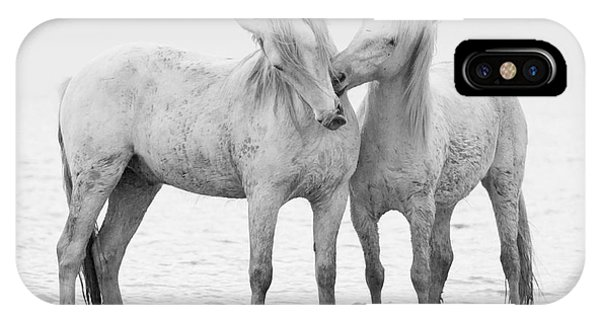 White Horse iPhone Case - Early Morning Horse Play by Carol Walker