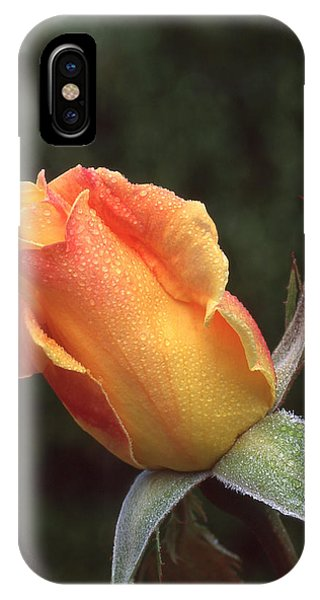 Early Morning Rosebud IPhone Case