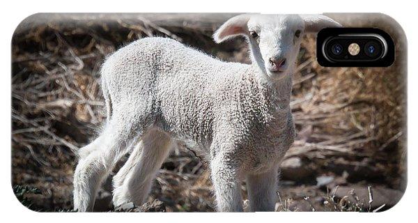 March Lamb IPhone Case
