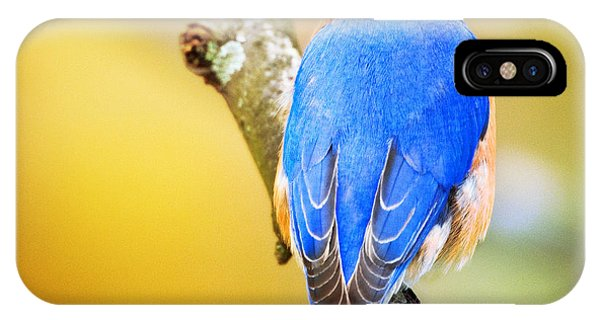 Eastern Blue Bird Of Spring IPhone Case