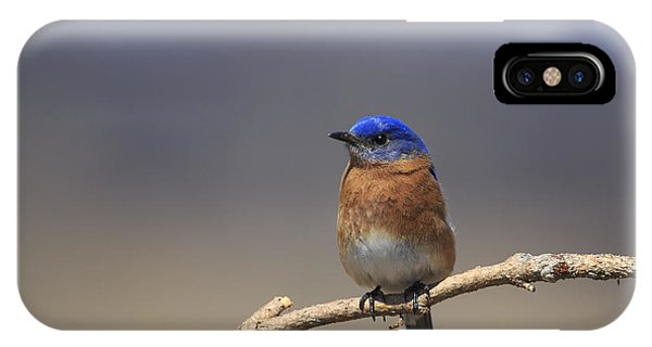 Eastern Bluebird 3 IPhone Case