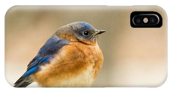 Crossville iPhone X Case - Eastern Bluebird by Douglas Barnett