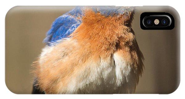 Crossville iPhone X Case - Eastern Bluebird Male Ruffled by Douglas Barnett