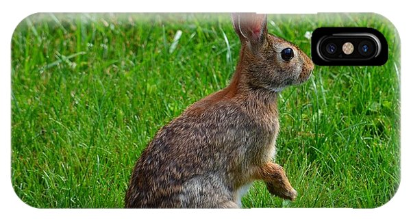 Eastern Cottontail IPhone Case