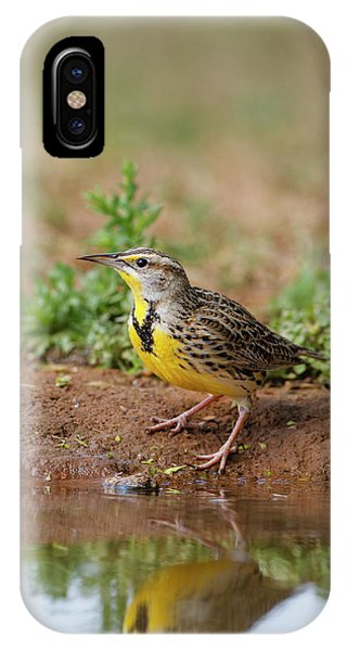 Meadowlark iPhone Case - Eastern Meadowlark (sturnella Magna by Larry Ditto