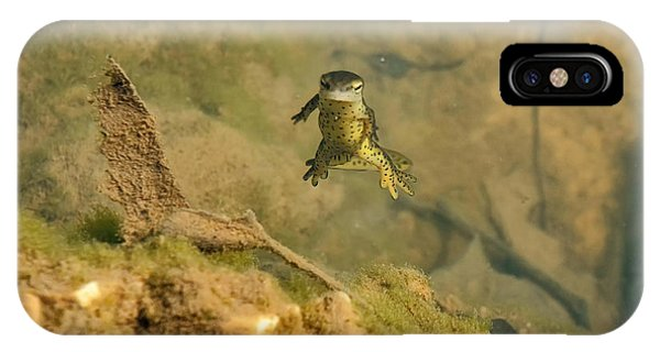 Newts iPhone Case - Eastern Newt In A Shallow Pool Of Water by Chris Flees