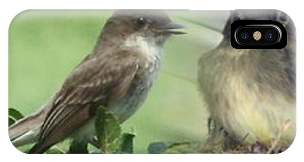 Eastern Phoebe Family IPhone Case