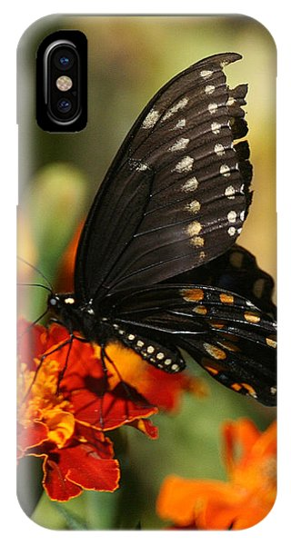 Eastern Swallowtail On Marigold IPhone Case