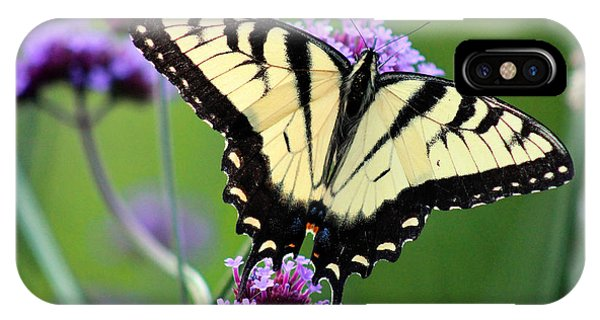 Eastern Tiger Swallowtail Butterfly 2014 IPhone Case
