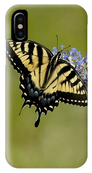 Eastern Tiger Swallowtail On Butterfly Bush IPhone Case