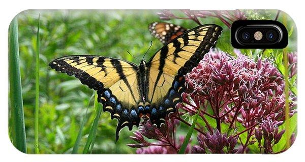 Eastern Tiger Swallowtail On Joe Pye Weed IPhone Case