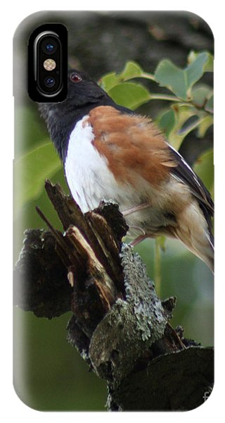 Eastern Towhee IPhone Case