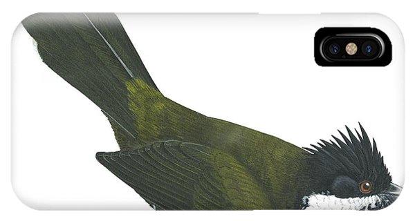 Eastern Whipbird IPhone Case