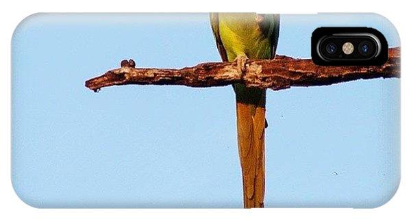 Green iPhone Case - Parakeet Eating Fruit  by Hitendra SINKAR