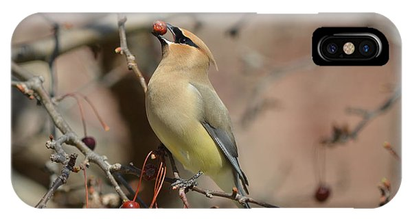 Cedar Waxwing In Winter IPhone Case