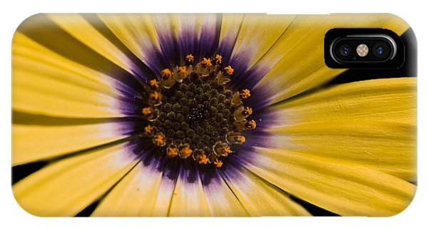 Ebullient IPhone Case
