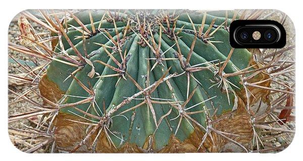 Echino-cactus Like A Ball IPhone Case