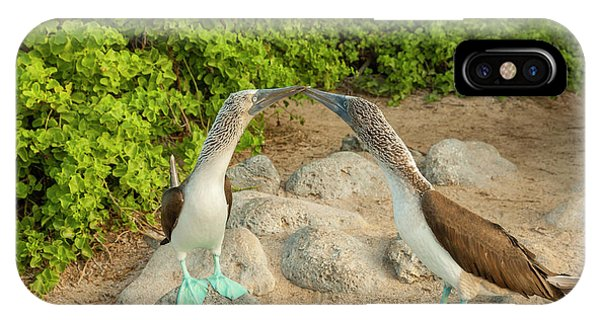 Boobies iPhone Case - Ecuador, Galapagos National Park, San by Jaynes Gallery
