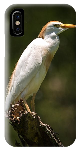 Cattle Egret Perched On Dead Branch IPhone Case
