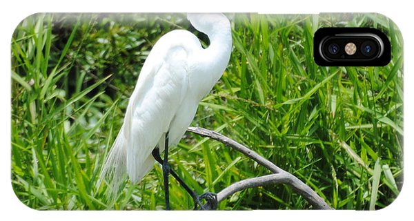 Egret Perching On Branch IPhone Case