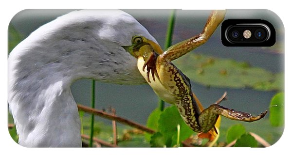 Egret With Frog IPhone Case