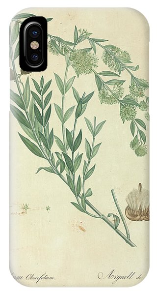 North London iPhone Case - Egyptian Swallow-wort by Natural History Museum, London/science Photo Library