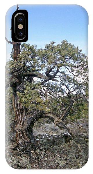 El Malpais Twisted Tree 1 IPhone Case