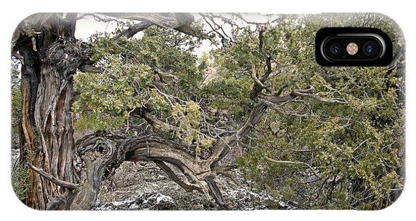 El Malpais Twisted Tree 2 IPhone Case