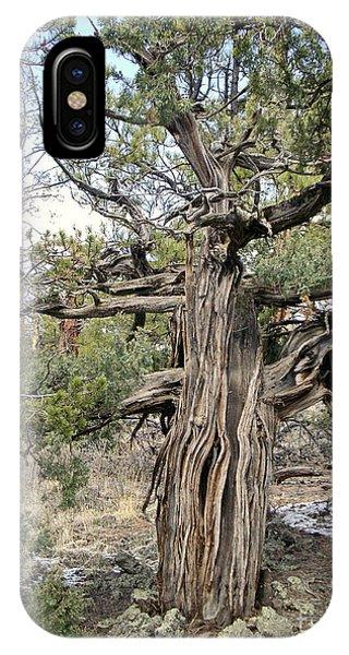 El Malpais Twisted Tree 3 IPhone Case