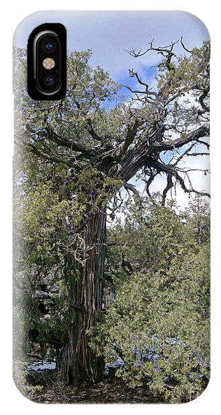 El Malpais Twisted Tree 4 IPhone Case