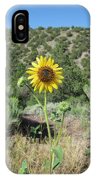 Elated Sunflower IPhone Case