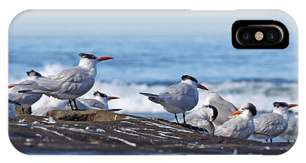 Elegant Terns La Jolla IPhone Case