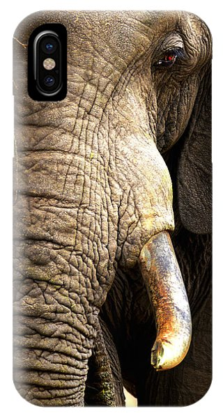 Elephant Close-up Portrait IPhone Case