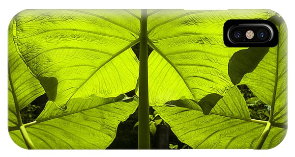 Elephant Ear Leaves In The Rainforest IPhone Case