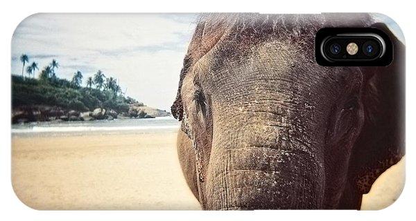 Elephant On The Beach IPhone Case