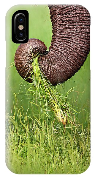 Close-up iPhone Case - Elephant Trunk Pulling Grass by Johan Swanepoel