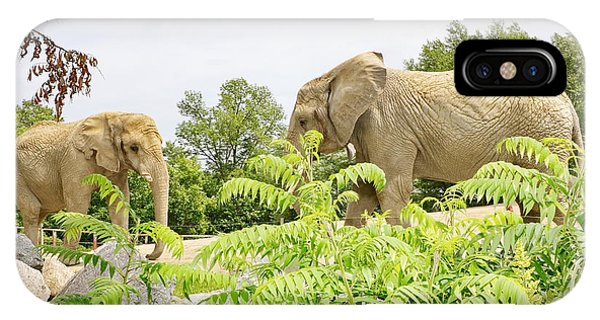 Elephants Thika And Toka At The Toronto Zoo IPhone Case