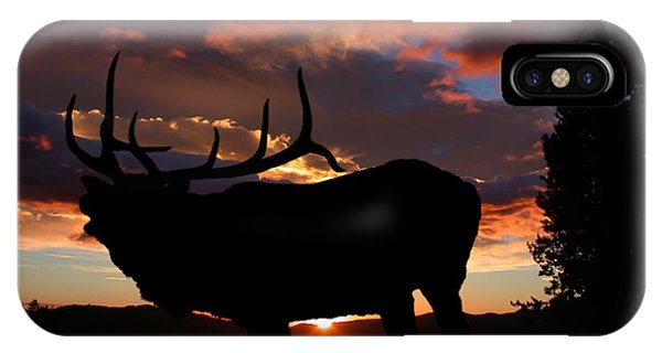 Elk At Sunset IPhone Case
