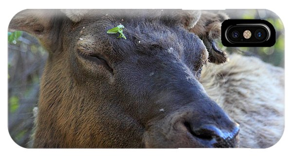 Elk Chuckle IPhone Case