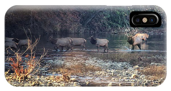 Elk Crossing The Buffalo River IPhone Case