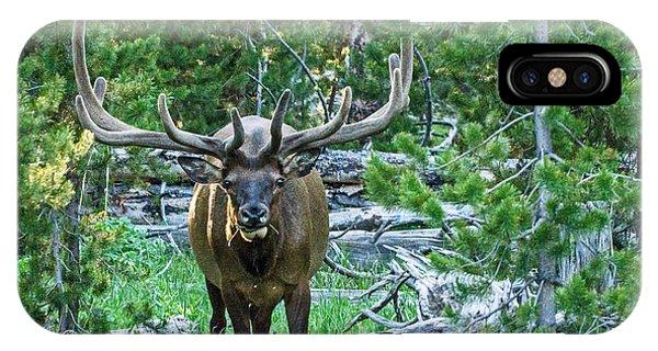 Elk Eyes IPhone Case