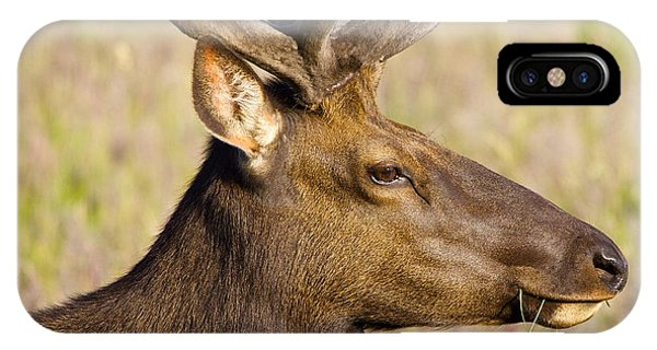 Elk Profile IPhone Case