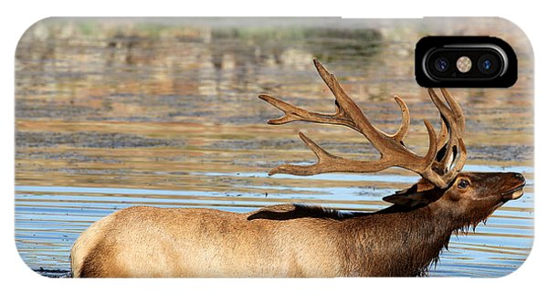 Elk Cooling Down In Lake IPhone Case