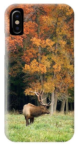Elk With Autumn Colors IPhone Case