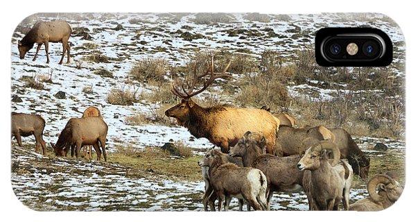Elk With Big Horn Sheep, Oak Creek IPhone Case