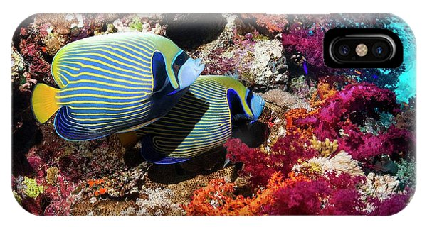 Ichthyology iPhone Case - Emperor Angelfish On A Reef by Georgette Douwma