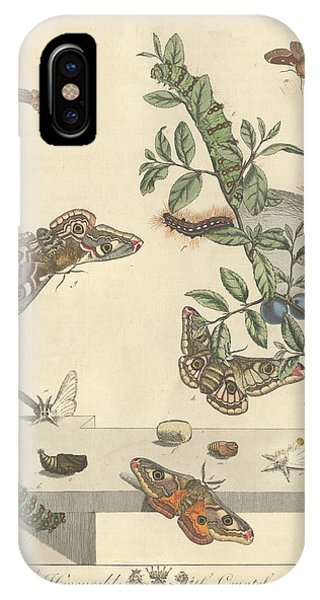 Chrysalis iPhone Case - Emperor Moth by Natural History Museum, London/science Photo Library