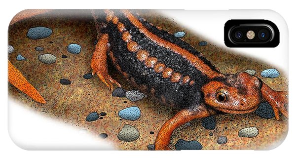 Newts iPhone Case - Emperor Newt by Roger Hall