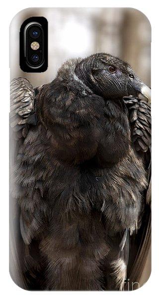 Condor iPhone Case - Endangered Andean Condor by Brandon Alms