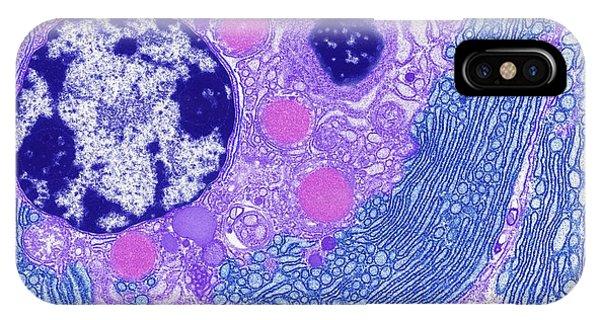 Er iPhone Case - Endoplasmic Reticulum by Steve Gschmeissner